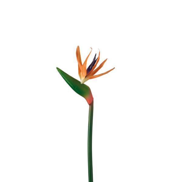 56af4d029b662 - Floare decorativă Sterlitzia 70 cm (L062756)