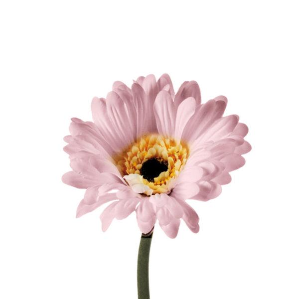 hc1724.jpg 1 600x600 - Floare decorativă Gerbera creme/white 50 cm (L056963)