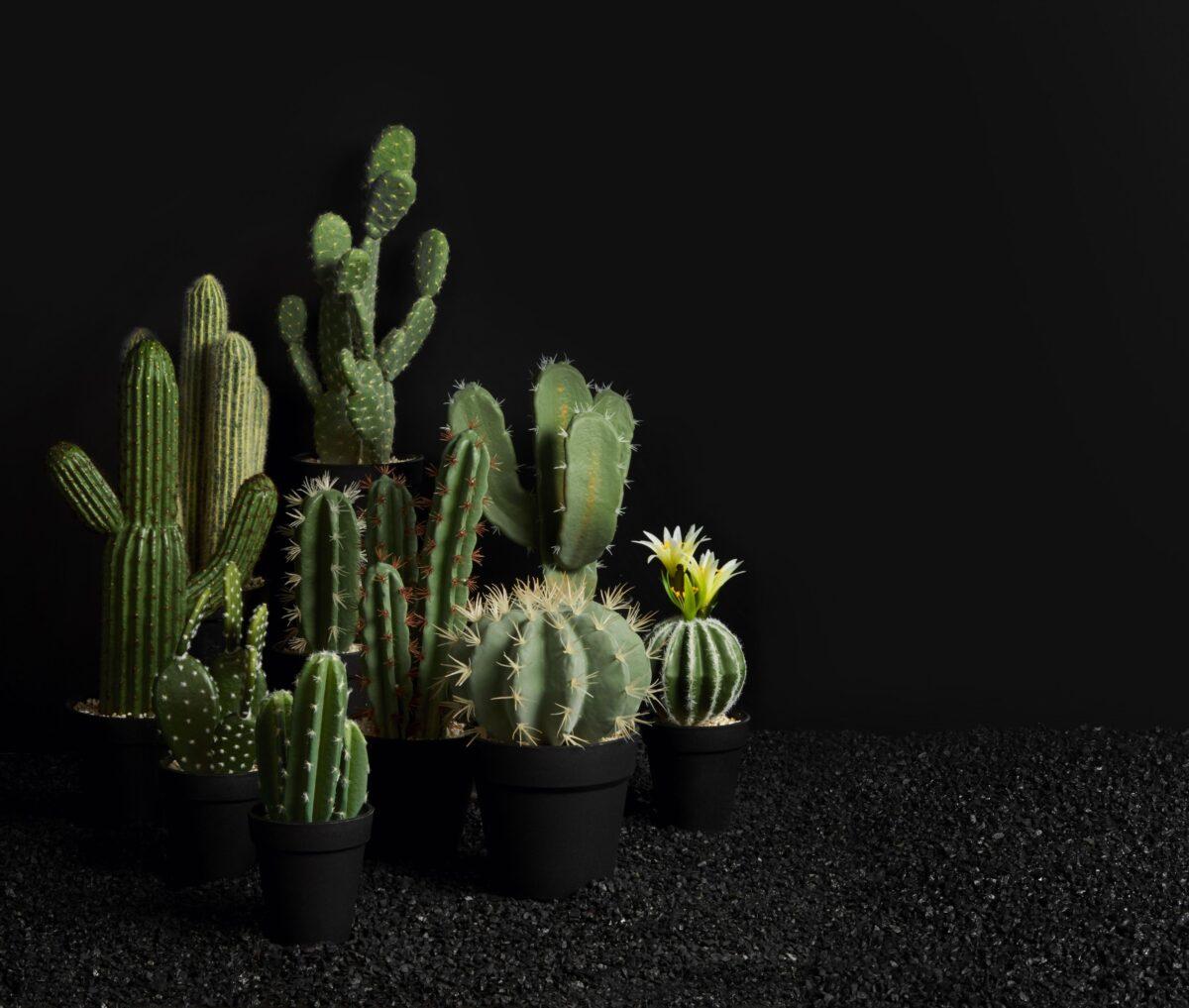 66201444 1r9IcfBvVwAnfg 1200x1017 - Decor Cactus Asa Selection (66212444)