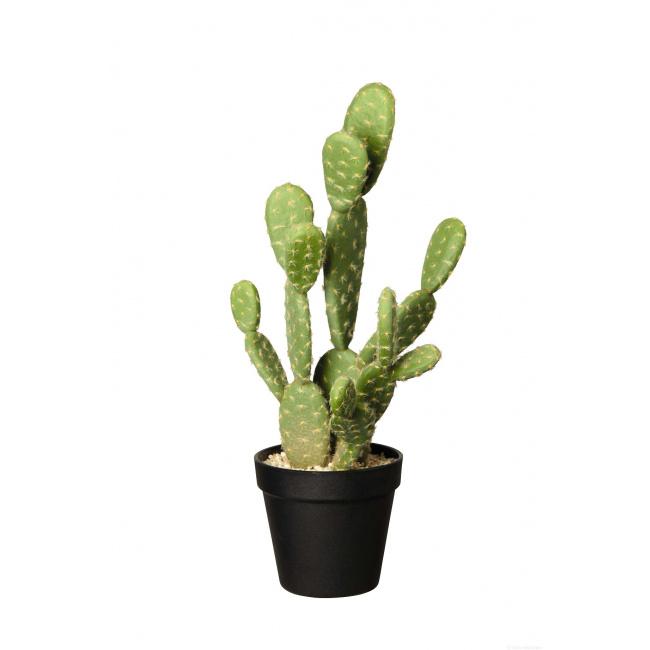 66214444 dekokakteen top - Decor Cactus Asa Selection (66214444)