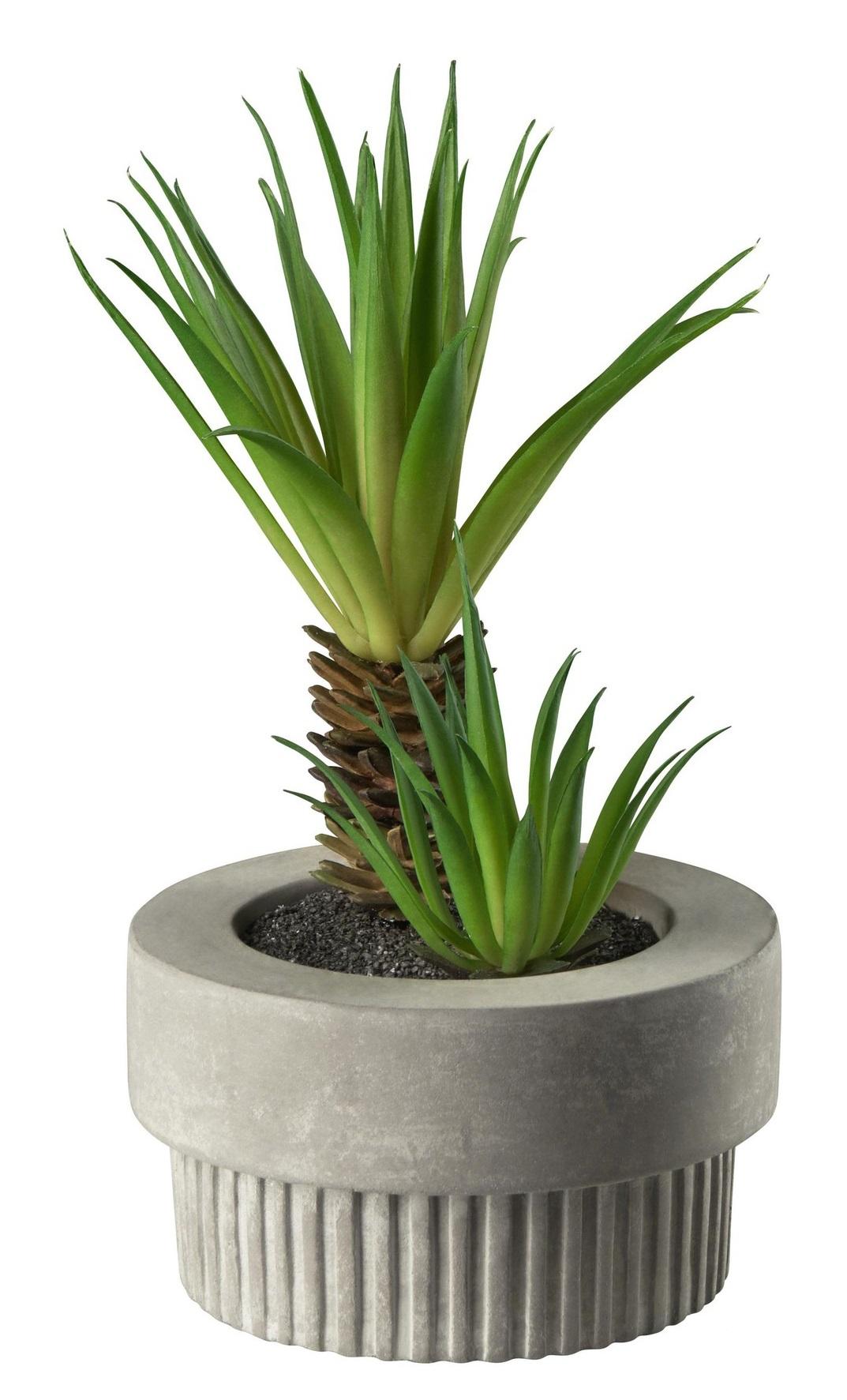 d16b85d2dcc611923424ea70ecc9b981 1 - Decor Succulent green ASA Selection (66255444)